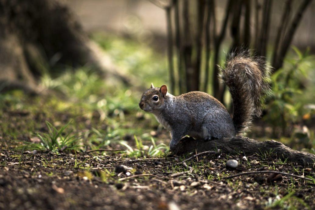 Squirrel Posing