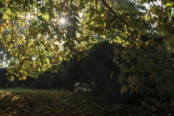 Suffolk Morning Mist 2