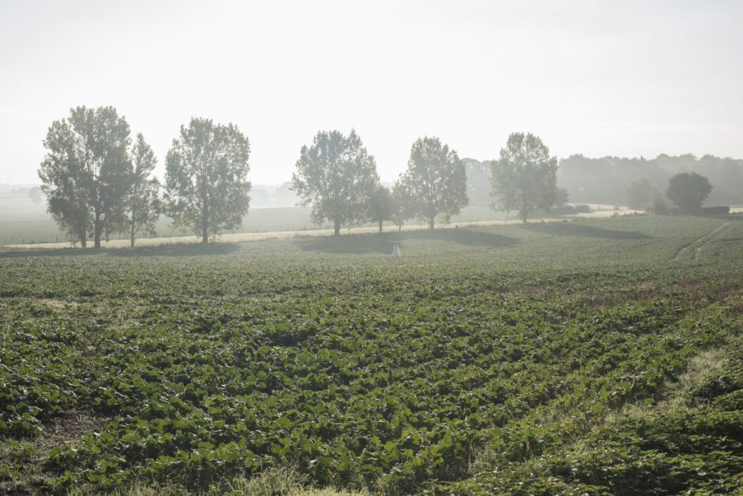 Suffolk Morning Mist 3