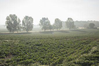 Suffolk Morning Mist 3
