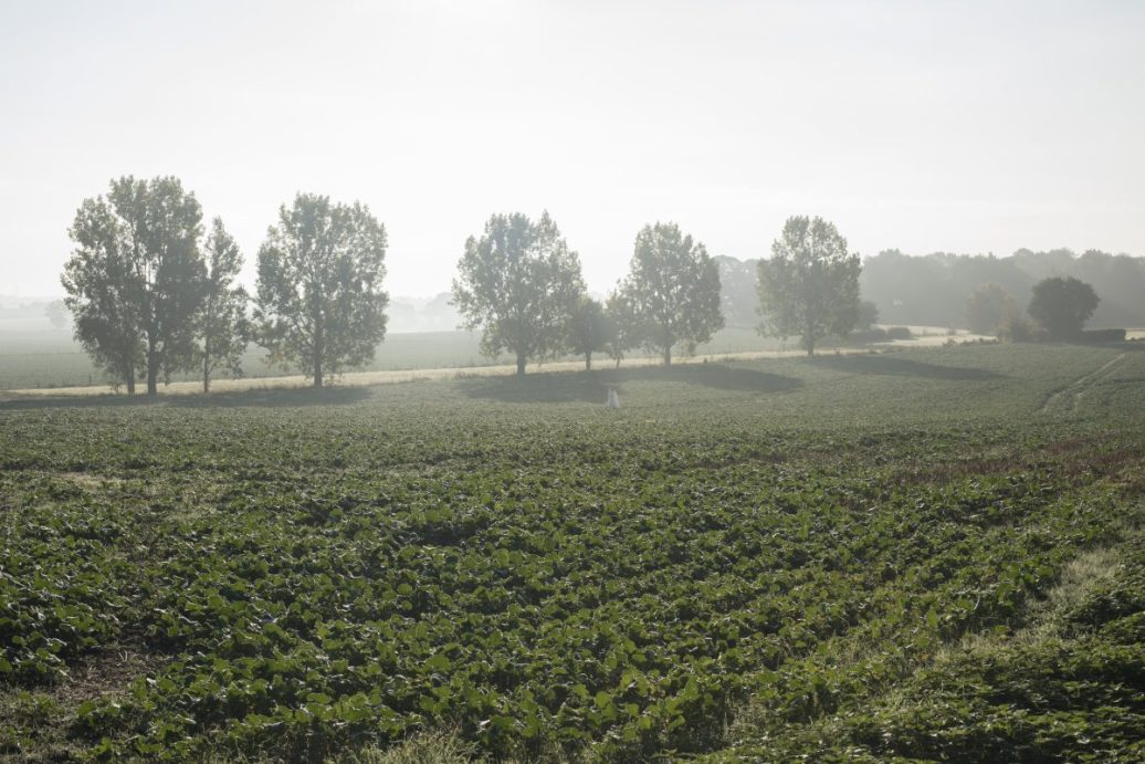 Suffolk Morning Mist 4
